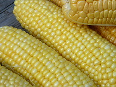 ears of corn (normanack) Tags: summer yellow garden corn vegetable maize