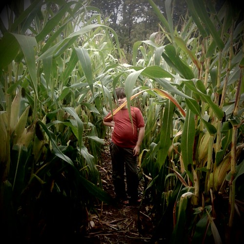 Parker in the corn maze
