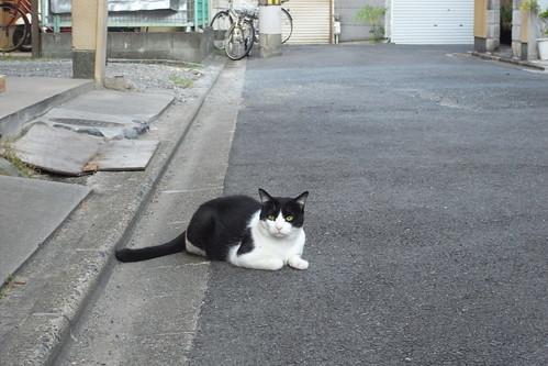 Today's Cat@20090930