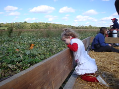 Looking At The Pumpkin Patch