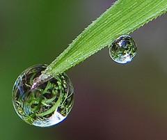 Grass Droplets 3