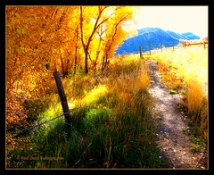 The last trail to the old road (mountainbeliever) Tags: autumn mountains southwest nature outdoors colorful fallcolors country meadows trails fences foliage durango picnik fourcorners valleys fenceposts southwestcolorado colorfulcolorado treesandgrass mountainsides coloradoautumn