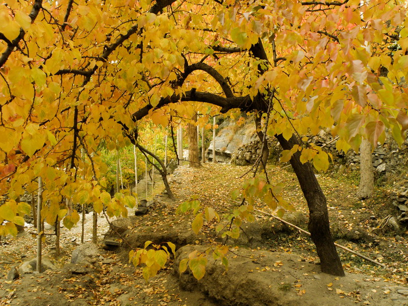 4063853932 68d046cf6e o - Stunning Beauty Of Hunza Valley Pakistan