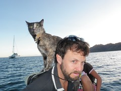 Our Boat Parrot is a Cat