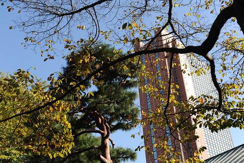紅葉とキャロットタワー