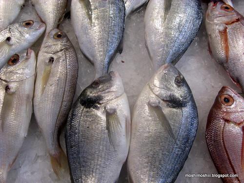 peixe - fish