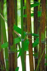 Bamboozled at Great Dixter! (antonychammond) Tags: uk england green garden britain bamboo eastsussex christopherlloyd greatdixter beautifulphoto mywinners saveearth firsttheearth citrit simplysuperb manorhousegarden arkiesnaturegroup