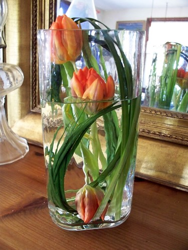 Submerged orange tulips