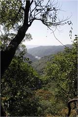 南何山自然谷。圖片來自:荒野協會。