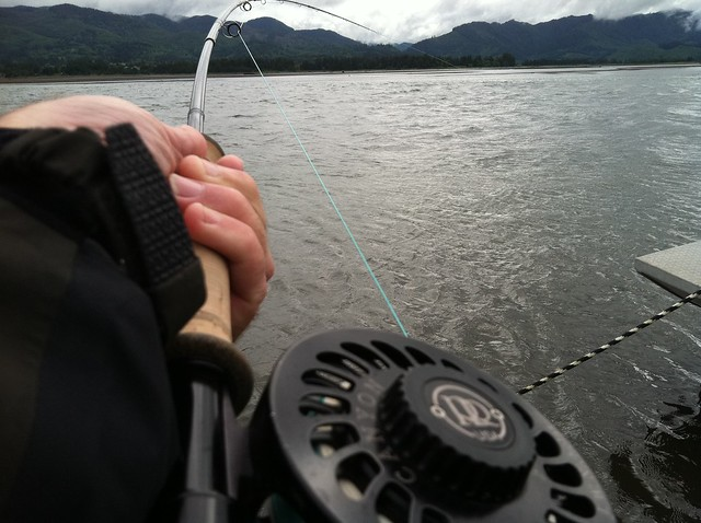 Chinook Report from Jay Nicholas in Tillamook Bay | The