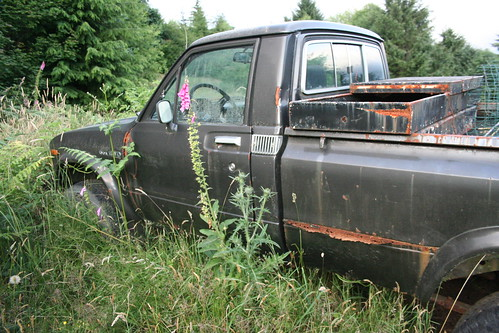 Toyota truck in the weeds
