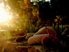 Sunrise in a Mediterranean Garden (Ana Bel) Tags: