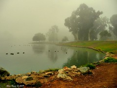 November Fog (Mine Beyaz) Tags: california park trees mist lake leaves misty fog foggy sis agac sisli yapraklar yaprak minebeyaz