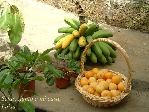 plátanos y ciruelas