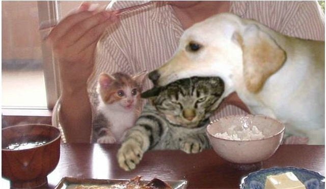 cats&dogs_19