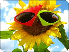 Good morning Sunshine ! (delitefulimage) Tags: sky sun flower colors sunglasses clouds happy glasses colours joy bee bumblebee sunflower getty happyhappyjoyjoy supershot ysplix delitefulimage