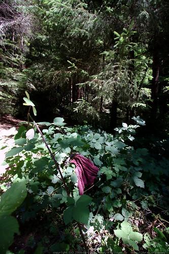 squatter debris? - walking in the humboldt redwoods - _MG_1155