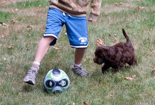 Soccer dog?