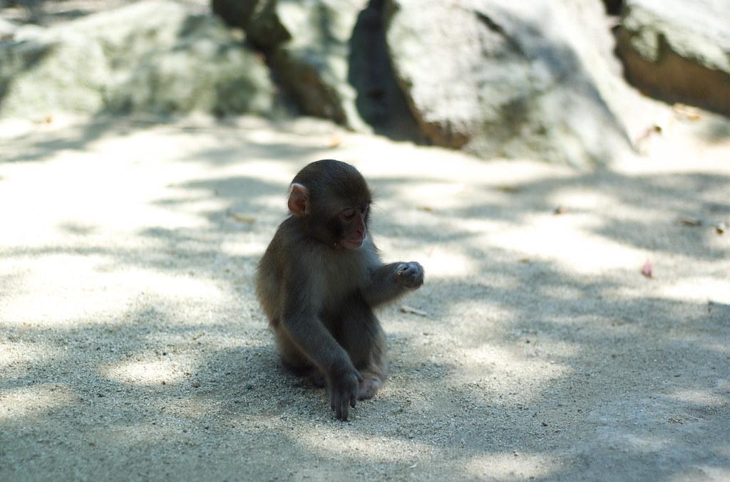 monkey #9
