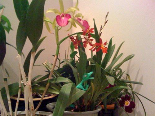 critter-among-orchids.jpg
