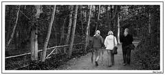 NUP-Sep09-0005 (der_lord) Tags: park wolf natur ziege schwan schwarz eichhorn reh farn stroh hirsch br maus bren eichhrnchen ziegen umwelt storch gerte eichhoernchen muse dammwild strohballen g strche gstrow wlfe schwarzerschwan ziegenpo guestrow naturundumweltpark
