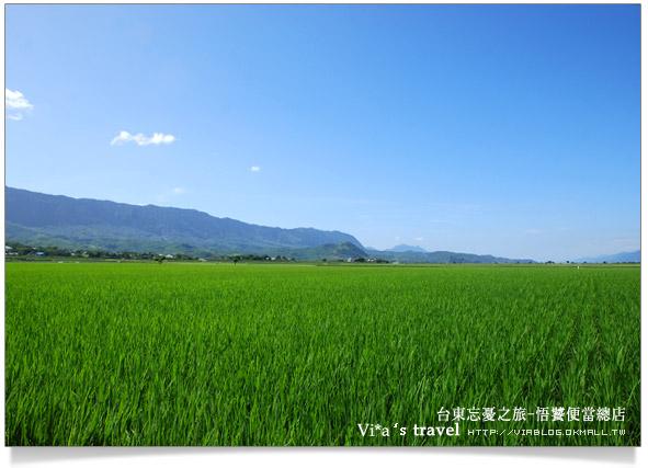 【台東美食】台東池上鄉~悟饕池上便當文化故事館2