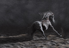 Enlighted (Angel-86) Tags: horse black drawing stallion andalusian colouredpencils