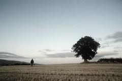 Les Grands Espaces...... (Nicolas Valentin) Tags: tree nature landscape scotland scenery late isolation nicolasvalentin lesolitaire