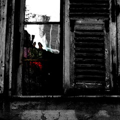 a glimpse (jenny downing) Tags: wood shadow red blackandwhite distortion france flower reflection green texture window glass lines petals nice chat distorted half shutters geranium gossip oldglass oberflchen infrance jennypics takeninfrance jennydowning asinnicefrance butnodelphiniumsblue geraniumsred photobyjennydowning jennydowning2008