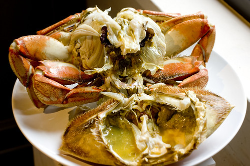 open Dungeness Crab 4