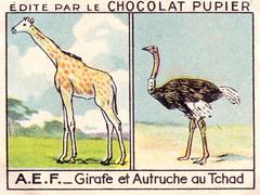 pupier afrique042