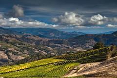 Hillside Vineyard Closeup (Tom Moyer Photography) Tags: california sky grass clouds vineyard hills sonomacounty oaks lightroom alexandervalley geysersoad