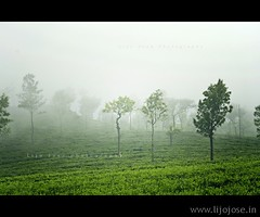 An escape to misty tea gardens
