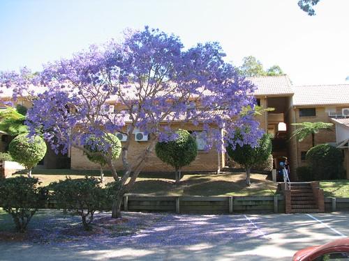 Exam tree