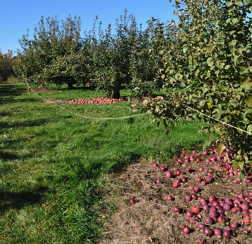 Apple Field