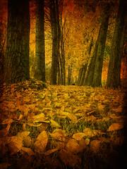 autumn leaves 09