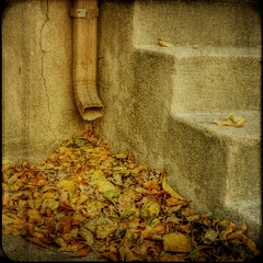 gathering (jssteak) Tags: autumn fall texture leaves square highlands alley steps denver squareformat downspout texturesquared