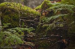 Rocio (chavinandez) Tags: autumn huesca aragón losvallesoccidentales aragn fotolocus