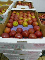 Kentish apples (Nick Saltmarsh) Tags: food london fruit kent market tray apples produce wholesale newcoventgardenmarket ncgm