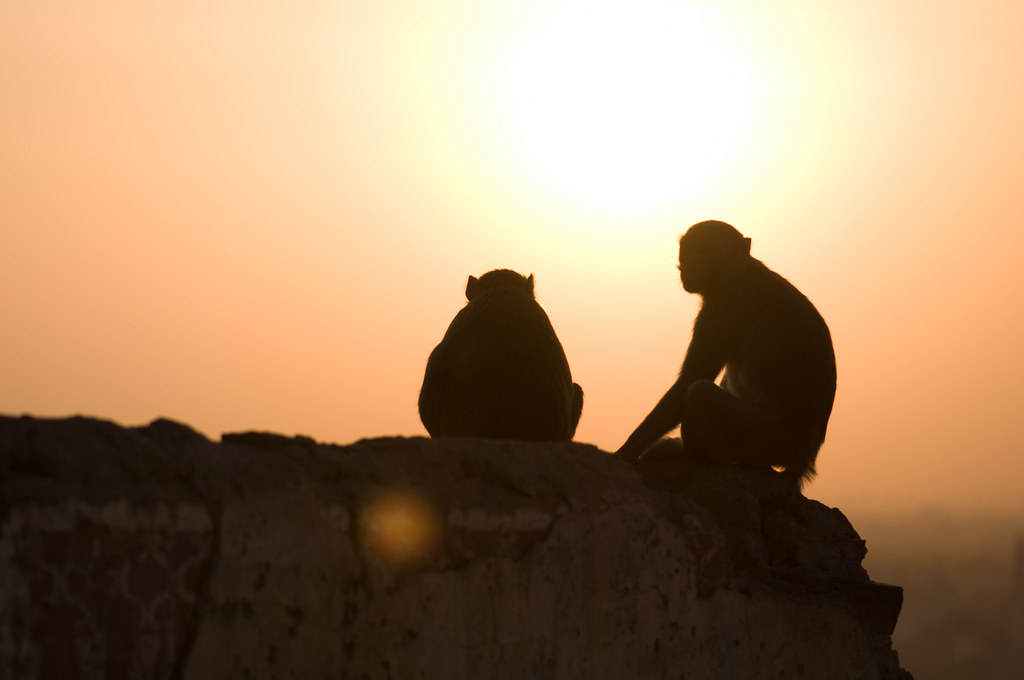 sunset at monkey temple.
