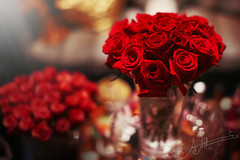 (A.A.A) Tags: birthday red roses love by happy photography december bin amour dedicated sh hamad aaa 6th nasser amna irresistible jetaime abdulaziz althani fedaitek