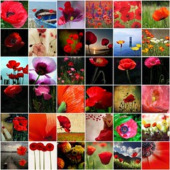 Morgaine Loves Poppies