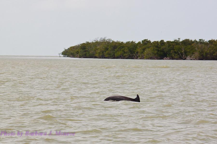 Everglades National Park-10,000 Islands (2 of 16)
