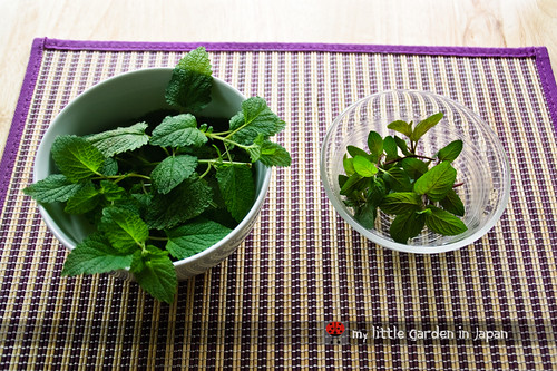 Lemon-balm-tea-1