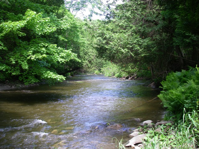 Humber River Trout section