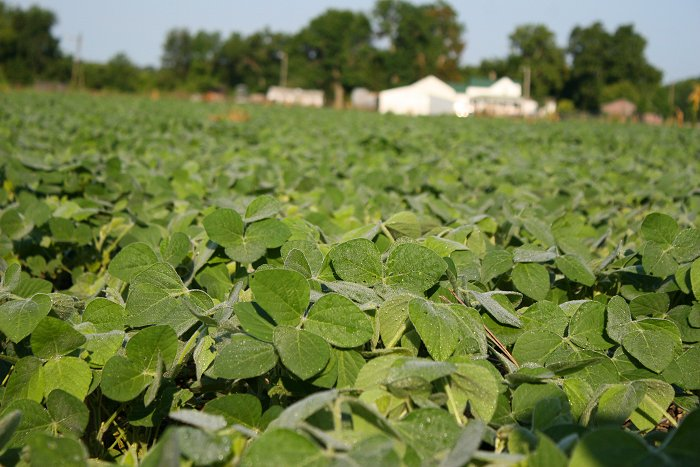 08-10-soybeans1