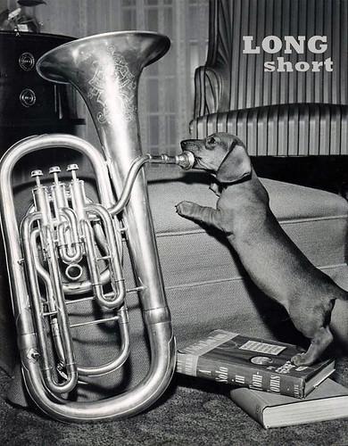 dachshund tuba