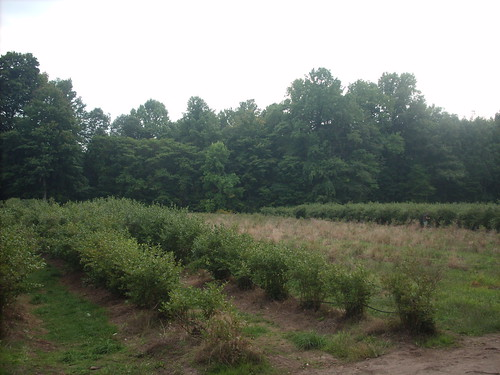 The Blueberry Patch in Sawyer, Michigan