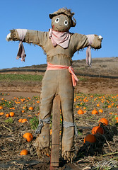 Scary? (Marcie Gonzalez) Tags: california county blue autumn sky orange holiday color cute fall halloween vegetables field standing canon pumpkin fun photography scary holidays colorful doll looking bright farm pumpkins farming scarecrow over center vegetable fabric fields destination farms crow gonzalez cloth patch middle oc scare patches marcie irvine scarecrows tanaka tanakafarms tanakafarm marciegonzalez marciegonzalezphotography