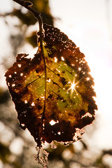 Sunbursts (Chris Hlady) Tags: sun fall leaves delete10 delete9 delete5 delete2 leaf delete6 delete7 delete8 delete3 delete delete4 starburst deletedbydeletemeuncensored